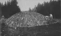 Ułożenie drewna przed przykryciem ziemią (około 1890 roku)